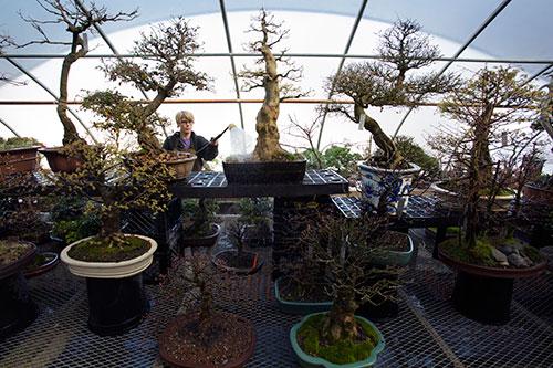 Cold hard bonsai