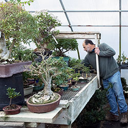 Hospital and spa services for bonsai trees