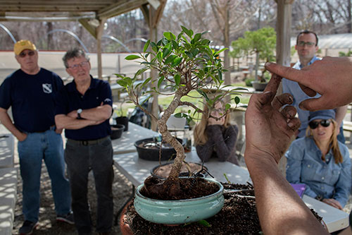 Lectures and Demos at Bonsai West